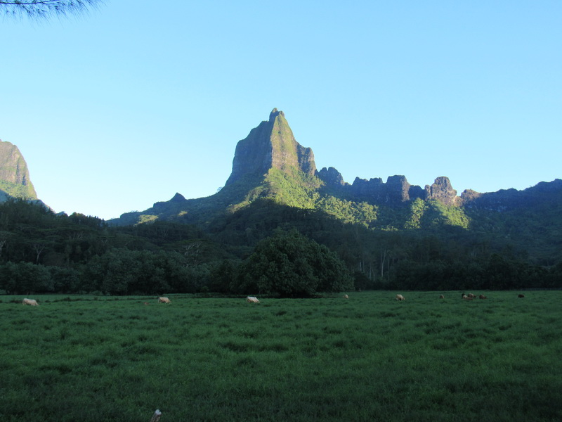 Rotui mounteen in Moorea