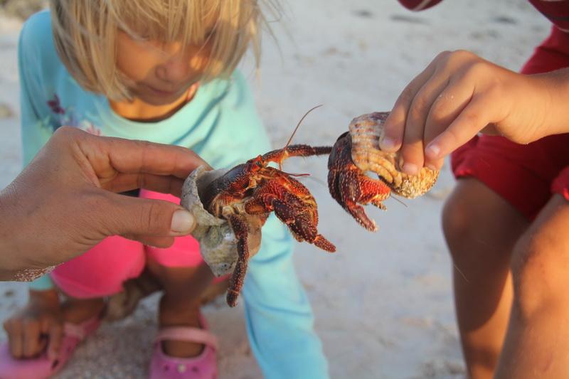 Tuamotu, crabs, French Polynesia