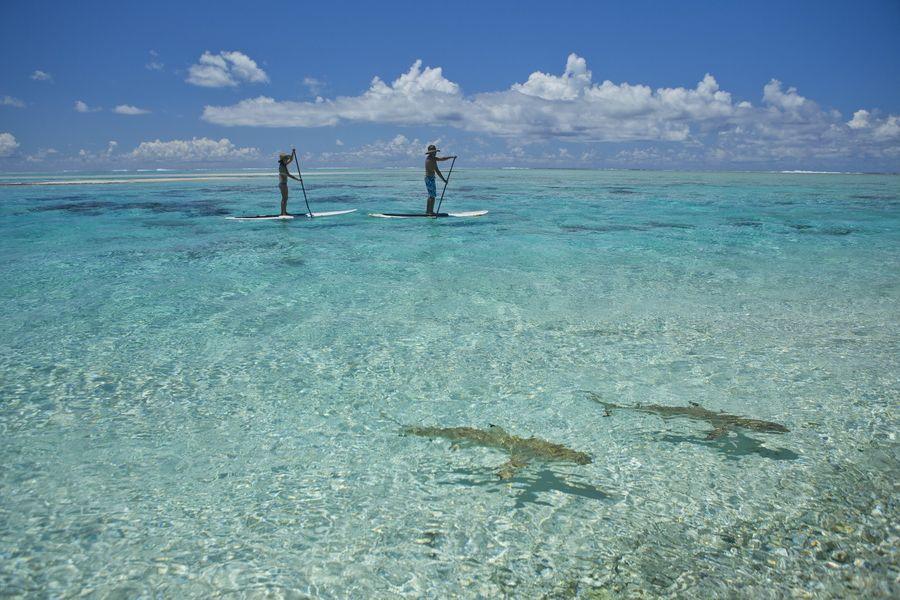 Lagoon Tuamotu, Tikehau, transparent water, sharks