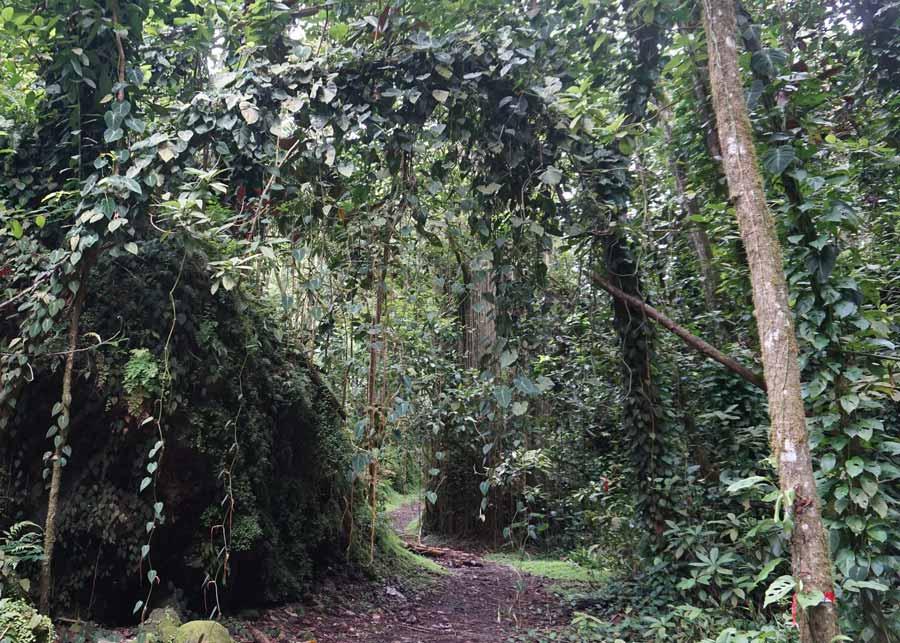 Таити-джунгли